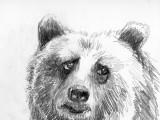 Bulgy Bear