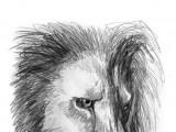 The Lion's Tears