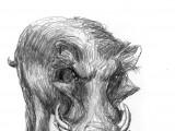 The Wild Boar