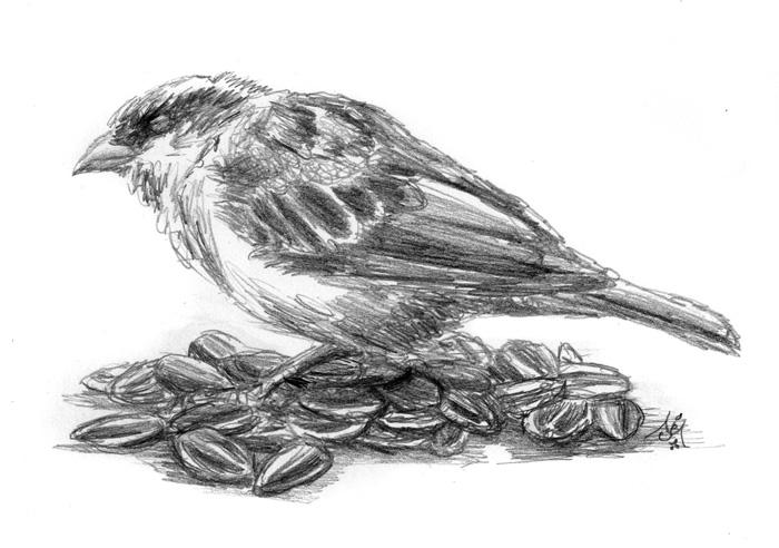 14_11_4365s_The_blind_sparrow001_BW_enh_700